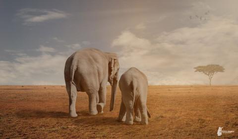 Fotostyle Schindler / Digital Artist / Elefanten / Photoshop Manipulation