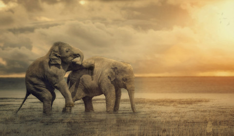 Fotostyle Schindler / Digital Artist / Elephant / Photoshop Manipulation
