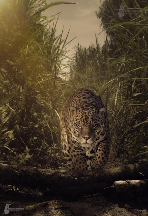Fotostyle Schindler / Digital Artist / Leopard / Photoshop Manipulation