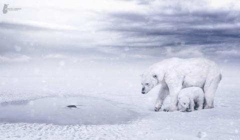 Fotostyle Schindler / Digital Artist / Eisbären / Photoshop Manipulation
