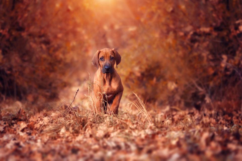 Tiere / Haustiere / Hunde / Fotografie / Fotostyle Schindler / Straubing www.fotostyle-schindler.de