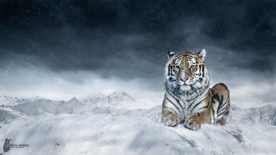 Digital Art by Fotostyle Schindler / Straubing / Fotograf Tiere, Manipulation, Artwork mit Löwen, Tiger, Eisbären, Elefanten uvm ...