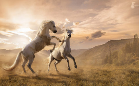 Digital Art by Fotostyle Schindler / Straubing / Fotograf Tiere, Manipulation, Artwork mit Pferden uvm ...