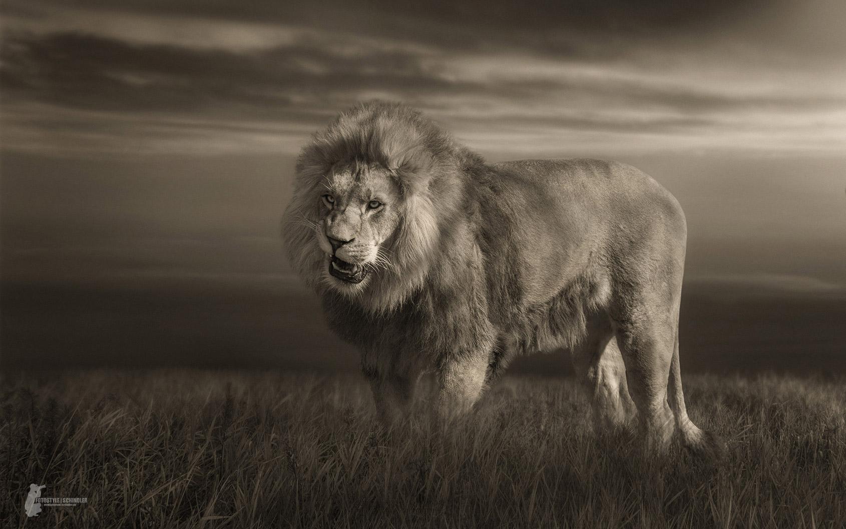 black lion video 1992 imdb - HD1690×1056