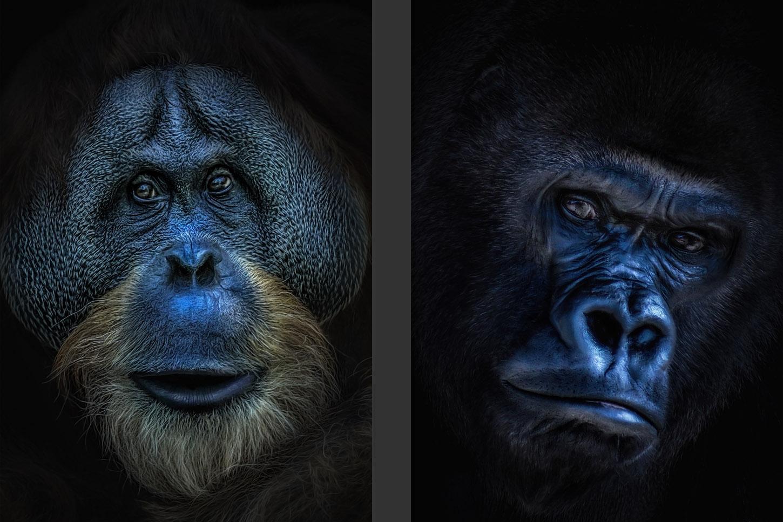 Bilder Shop - Digital Art - Tiere