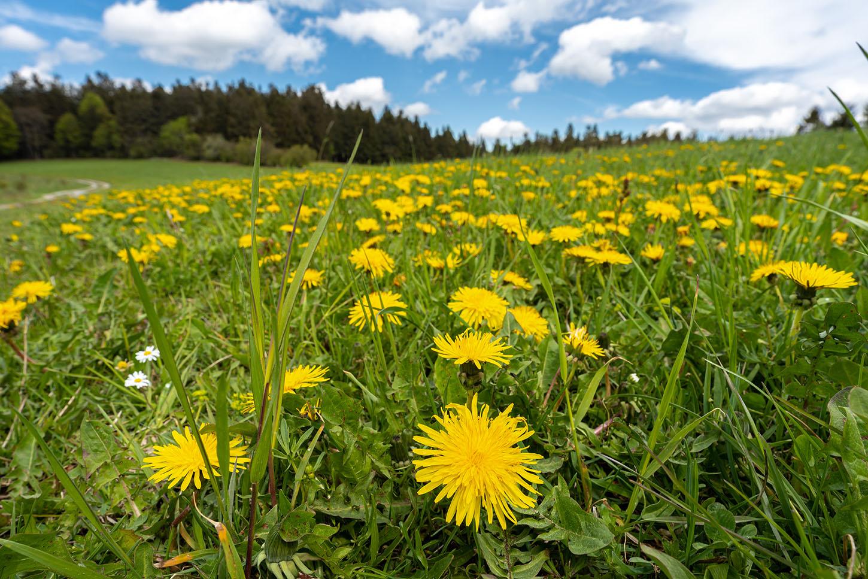 Käsplatte | Bayerischer Wald | Fotos |Fotograf Straubing