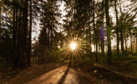Landschaftsfotos | Fotograf | Wanderung auf den Pröller, Bayerischer Wald