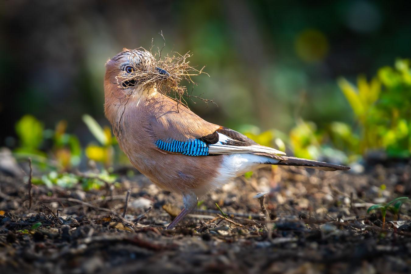 Fotograf Straubing Tiere und Natur in der Stadt